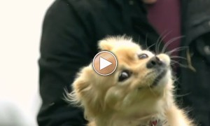 Watch This Hypnotic Ultra Slow Motion Video Of An Ultra Cute Puppy