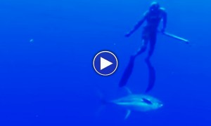 Watch A Giant Shark Collide Head On With An Unwary Diver