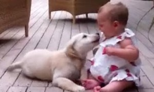 A Puppy Meets A Baby For The First Time And You Know What's Gonna Happen Next!