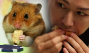 Watch This Little Hamster Beat The Crap Out Of A Legendary Eating Champion In His Own Game