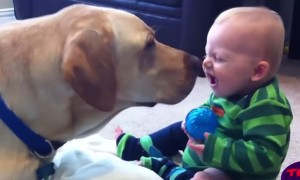 This Video Of Cute Babies And Dogs Playing Together Will Make Your Day