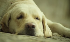 Watch A Man's Best Friend Do His Part For Humanity In This Moving Video