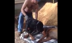 What This Rottweiler Does To His Brother Will Break Your Heart