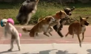 Watch 13 Dogs As They Shatter The World Record For Most Skips Over A Rope