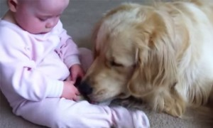 Watch How This Little Kid Tries To Take A Bone From His Dog