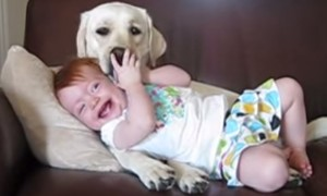 A Labrador Cuddling A 11 Month Old Baby Is All That Is Right In The World