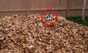 Watch A Dog Orgasm Playing With Leaves