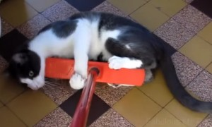 Your Stomach Will Hurt From Laughing After Watching This Epic Battle Between Cats And Brooms