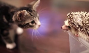 Watch This Adorable Video Of A Cute Kitten Meet Its Cute Little New Friend