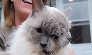 Meet The World's Oldest Living Two-Faced Cat