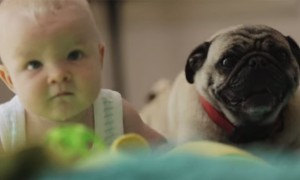 This Beautiful Video Will Show You Why Dogs Are Man's Best Friend