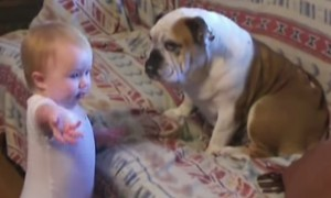 Watch How A Bulldog Got Schooled By This Adorable Kid