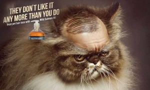 These 24 Print Ads Starring Animals Are Hilariously Cute