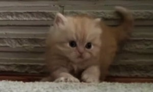 What This Cute Little Kitten Did Will Make You Just Want To Say Awww!