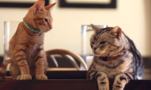 A Wise Old Cat Explains To Its Kitten About A New Family Member