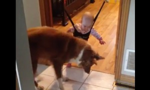 Watch A Dog Try To Save A Baby Human From Its Shadow