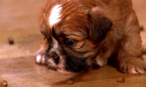 Puppies Learn Things For The First Time And It's SUPER CUTE!