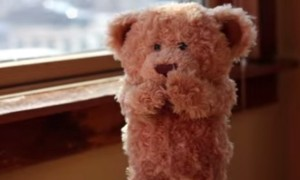 This Video Of An Adorable Teddy Waiting For It's New Friend Just Stole My Heart