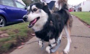 Dog Runs For The First Time With 3D Printed Prosthetics