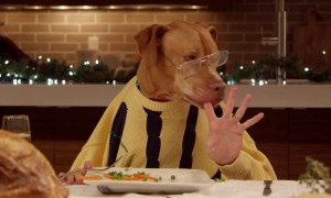 Watch Dogs And A Cat Eat Dinner With Human Hands In This Hilarious Video