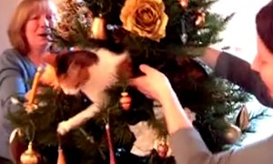 Hilarious Compilation Of Cats Destroying Christmas Trees