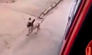 When I Realized Why This Dog Was Chasing Their Car, I Was In Tears