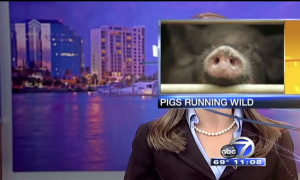 Watch 2014's Best News Bloopers In One Hilarious Video