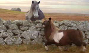 Why This Moonwalking Pony So Important To Everyone
