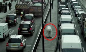 Find Out The Terrifying Reason Why A Giant Polar Bear Is Roaming The Streets Of London