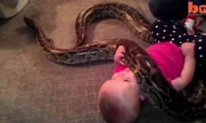 Man Forces His Baby To Play With A Giant Snake Just So He Can Start A Zoo