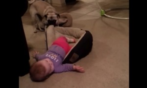 A Puppy And A Baby Fight For A Place To Sleep Is Too Cute To Handle