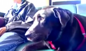 Super Smart Dog Figured Out How The Bus System Works So He Can Go To The Park By Himself