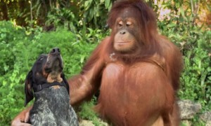 This Compilation Of Animals Being Friends In The Cutest Thing You Will Ever See