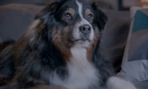Watch A Dog Save A Dying Relationship In This Heart Warming Valentines Day Ad