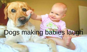 Dogs making babies laugh