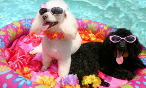 Doggy Pool Party Will Make You Smile!