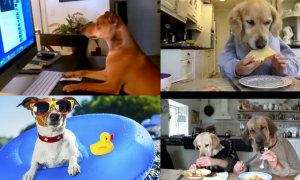 Have you seen Funny Dogs Acting Like Humans Compilation?