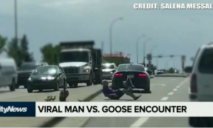 VIRAL MAN VS. GOOSE ENCOUNTER! MUST WATCH!