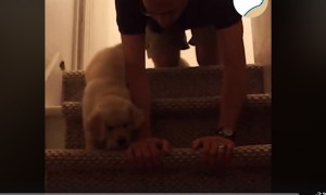 Cute Pup Learning To Use Stairs For The First Time!🐕💕