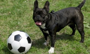 This 'footballer' dog is amazing: Has he got FIFA fever?