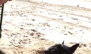 Dog Loves Being Buried in Sand