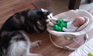 Dog preciously watches over 4-month-old baby
