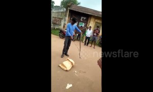 Cobra bites amateur snake-catcher in daring rescue