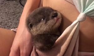Otter Pup Cuddles