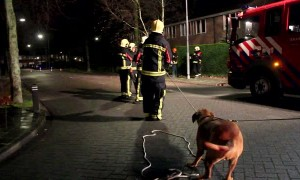 Dutch Firefighters Get a Little Help with Damaged Trees