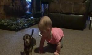 Dog Teaches Baby Girl How to Crawl – SO CUTE