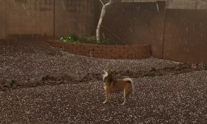 Dog Can't Get Enough of Hail