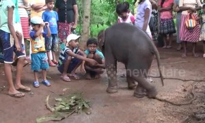 Baby elephant rescued from dangerous well plays with child villagers