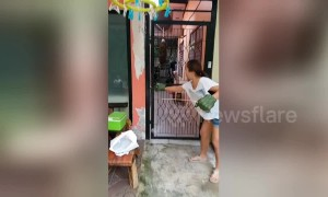 Mother catches python with her son's Incredible Hulk rubber gloves
