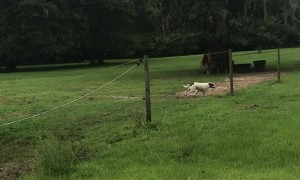 Donkey and Dog Playfully Chase Each Other